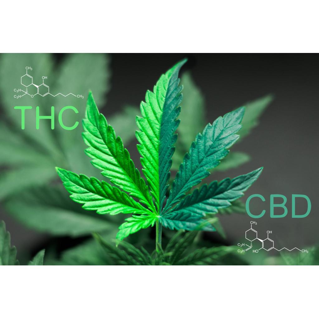Marijuana Facts - Ten Surprising Truths About Marijuana Medicine - medical-marijuana